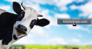 أسعار اللحوم الحمراء اليوم في مصر بلدي ومستورد الثلاثاء 13 أغسطس