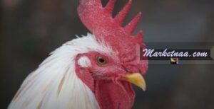 أسعار الفراخ البيضه  اليوم في مصر الثلاثاء 30-6-2020 وفق مؤشرات بورصة الدواجن البيضاء المصرية