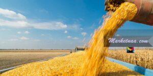 سعر طن الذرة اليوم في مصر الثلاثاء 26-1-2021| شامل سعر الطن للأصناف المختلفة بالجنيه المصري